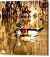 6980 - Wood Duck Canvas Print