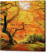 7 Abstract Japanese Maple Tree Canvas Print