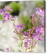 Alpine Wildflower Canvas Print