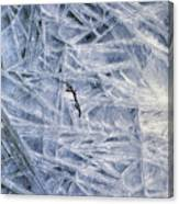 7. Ice Encrustation, Upper West Allen Canvas Print