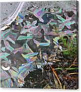 7. Ice Prismatics And Heather, Slaley Sand Quarry Canvas Print