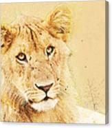 lioness Masai Mara, Kenya Canvas Print