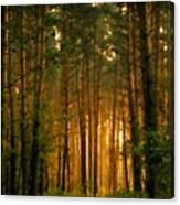 Nature In Canvas Print