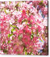 Pink Cherry Flowers Canvas Print