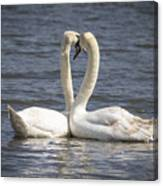 Swan -- Canvas Print