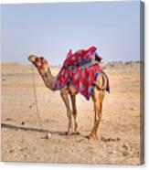 Thar Desert - India Canvas Print