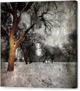 The Winter Time Canvas Print