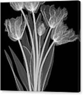 Tulips, X-ray Canvas Print