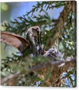 7311 Tilted Nest Feeding Canvas Print