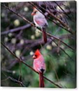 7440-008 Cardinal Canvas Print