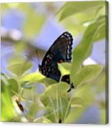 7759 - Butterfly Canvas Print