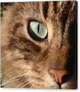 Cat Portrait Canvas Print