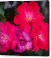 Knockout Roses Painted  Canvas Print