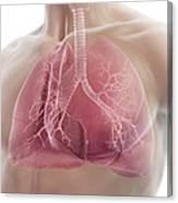Lungs Canvas Print