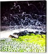The Adobe Canvas Print