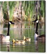 8132 - Canada Goose Canvas Print