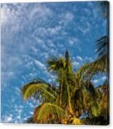 8156- Palm Tree Canvas Print