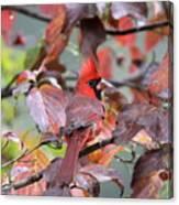 8623-001 - Northern Cardinal Canvas Print