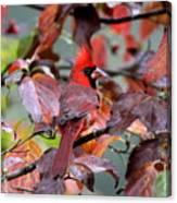 8624-001 - Northern Cardinal Canvas Print
