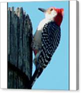 #8671 Woodpecker Canvas Print
