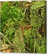 Mosses And Liverworts 8861 Canvas Print