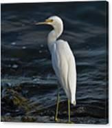 89- Snowy Egret Canvas Print