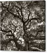 Angel Oak Live Oak Tree Canvas Print
