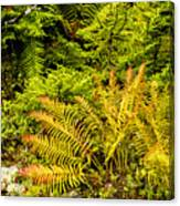 Fall Color Fern Canvas Print