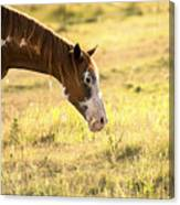 Horse In The Countryside  Canvas Print