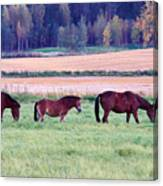 Horses Of The Fall Canvas Print