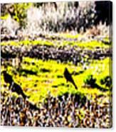 Journey Home Canvas Print