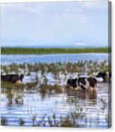 Lake Beysehir - Turkey Canvas Print
