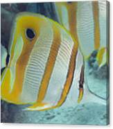 Malaysia Marine Life Canvas Print