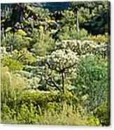 Saguaro Cactus Carnegiea Gigantea Canvas Print