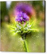 Silybum Eburneum Milk Thistle Canvas Print