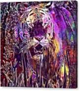 Tiger Predator Fur Beautiful  Canvas Print