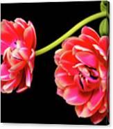 Tulip Floral Arrangement Canvas Print