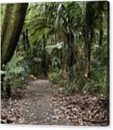 Walking Trail Canvas Print