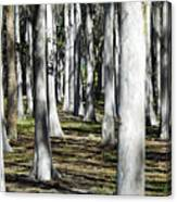 9182 Canvas Print