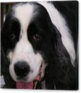#940 D1049 Farmer Browns Springer Spaniel Canvas Print