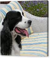 940 D1069 Farmer Browns Springer Spaniel Canvas Print