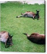 Australian Native Animals Canvas Print