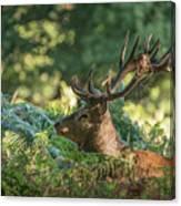 Majestic Powerful Red Deer Stag Cervus Elaphus In Forest Landsca Canvas Print