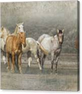 A Band Of Horses Canvas Print