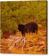 A Bear Staring At Something Canvas Print