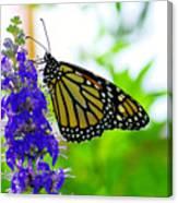 A Beautiful Monarch Canvas Print
