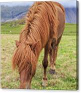 A Beautiful Red Mane On An Icelandic Horse Canvas Print