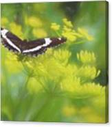 A Beautiful Swallowtail Butterfly On A Yellow Wild Flower Canvas Print