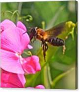 A Bee I Cee Canvas Print