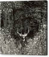 A Big Buck In Rut Canvas Print